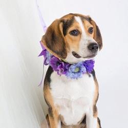 collier chien fleurs