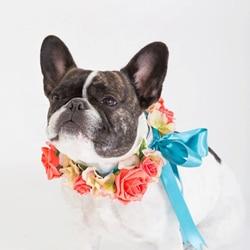 collier de chien pour mariage