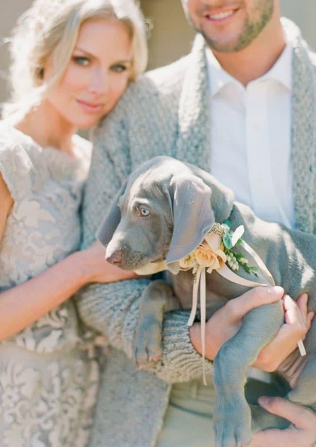 collier chien fleur mariage