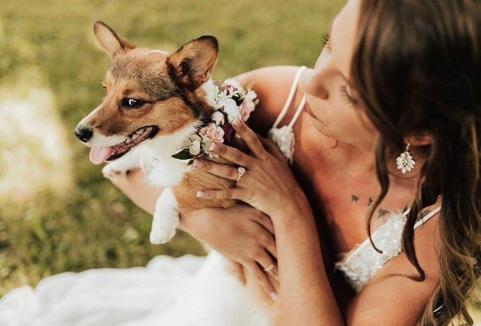 collier-chien-fleurs-mariage-2