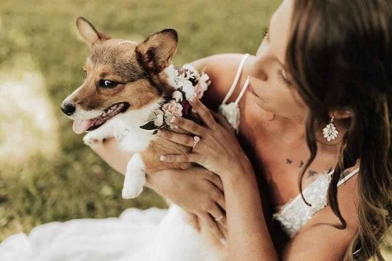 collier-de-fleurs-chien-mariage-4