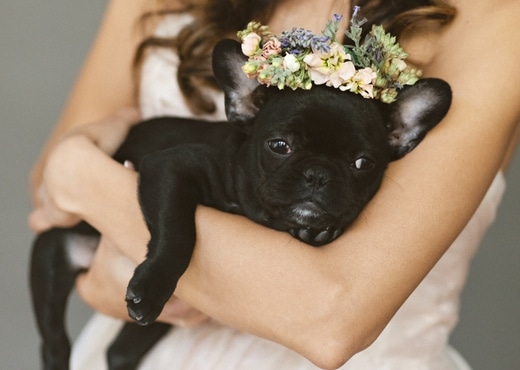 collier de fleurs chien mariage