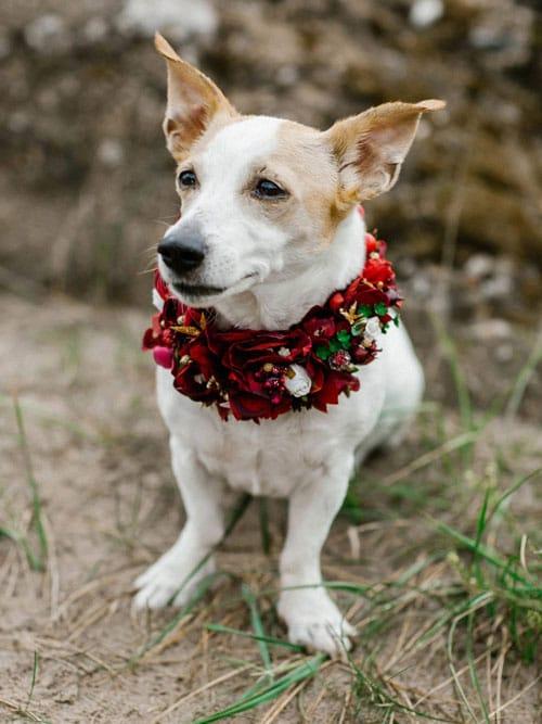 collier-de-fleurs-pour-chien-pour-mariage