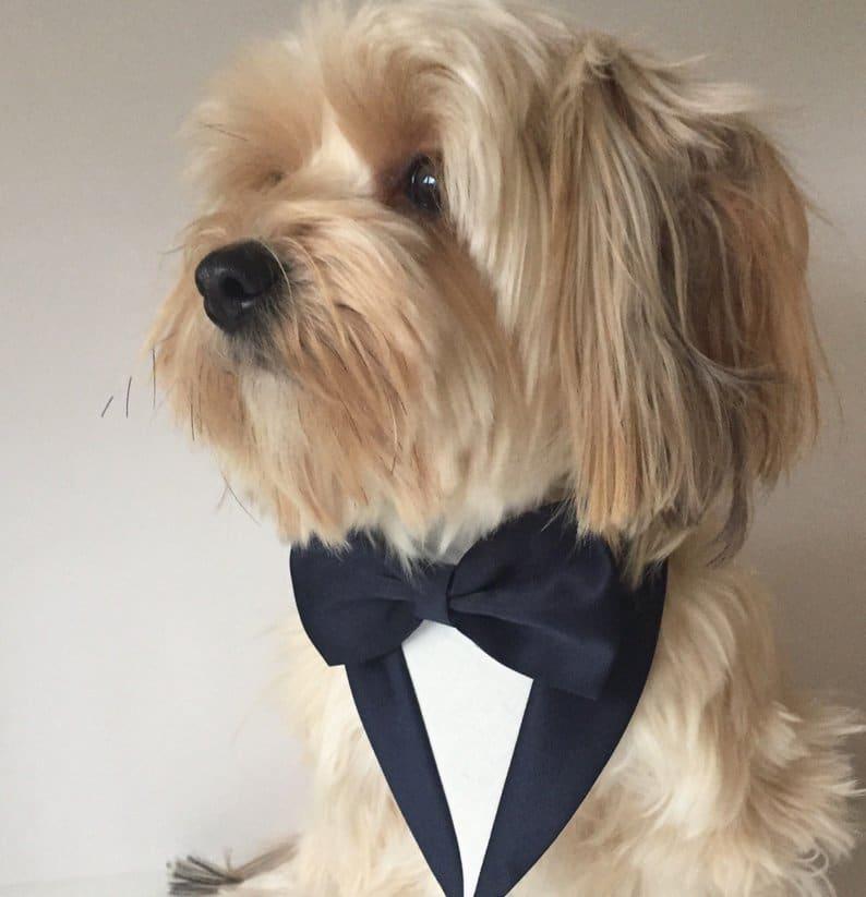 costume smoking de mariage chien 4