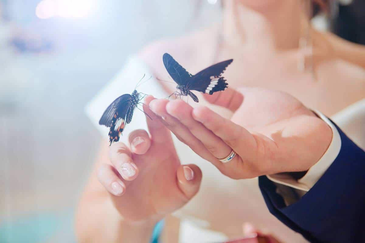 signification papillon en amour (1)